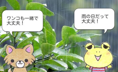 雨の日だって大丈夫
